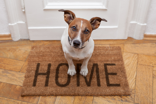 Picture of Leave Fido at Home with The Pet Nanny