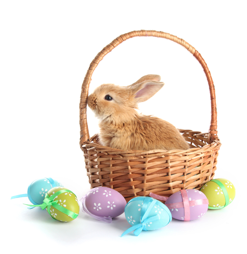Picture of Hop Around Philly on Easter