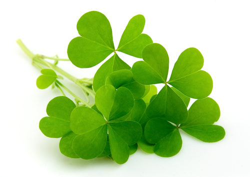 Picture of Celebrate St. Paddy's Day Without the Stress