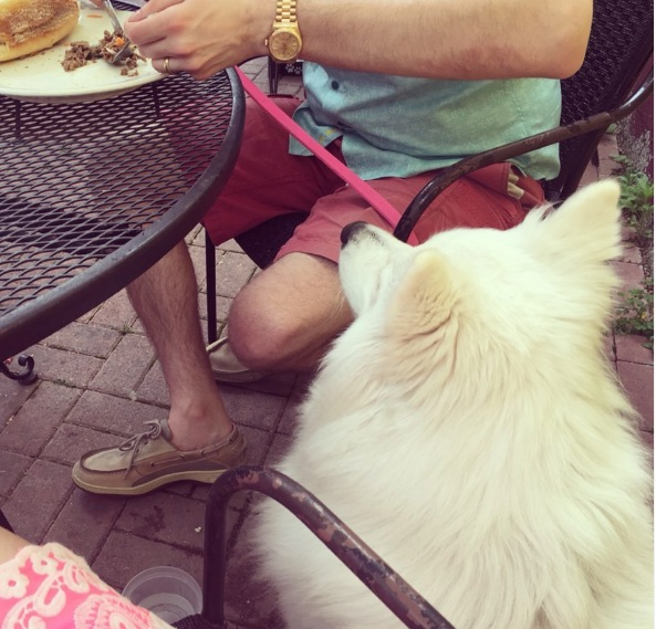 Picture of Summer Outings with Your Four-Legged Friend