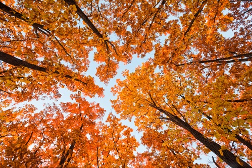 Picture of Where to See Fall Leaves Around Dalian